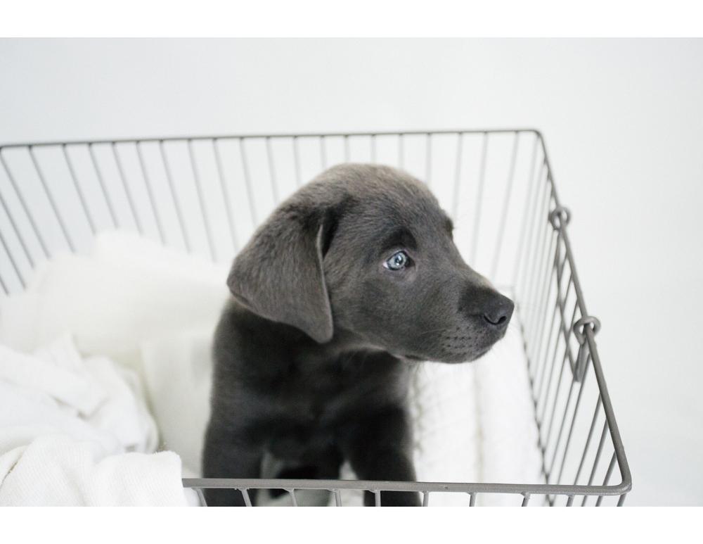 PuppiesBlog-4-1.jpg