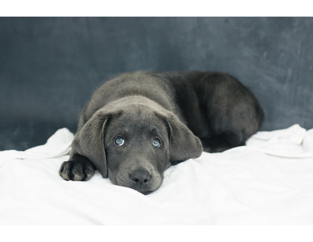 PuppiesBlog-4-3.jpg
