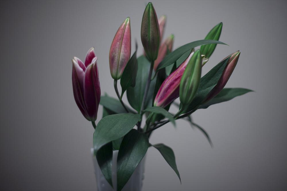 lilies, 3am
