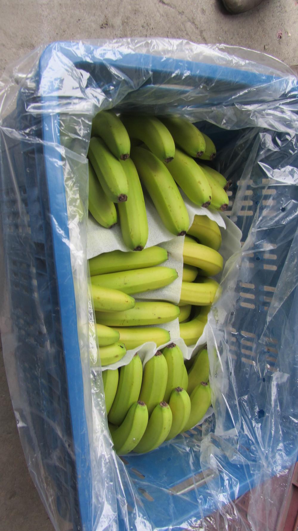 The bananas are stored in baskets,