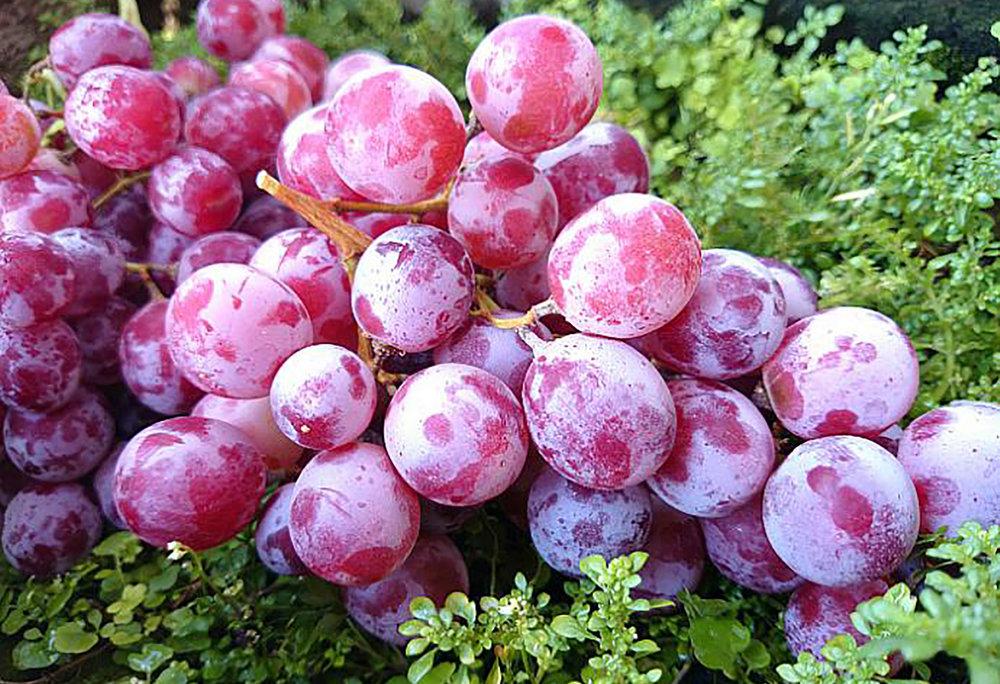 lychee grape.jpg