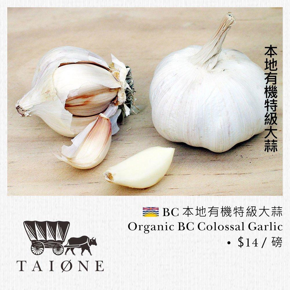 25. organic garlic.jpg