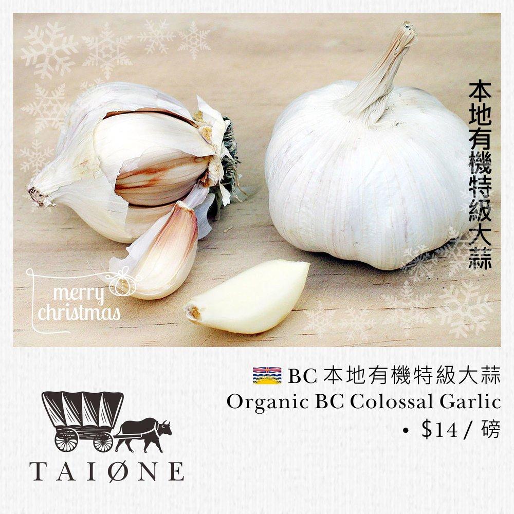 19. garlic.jpg