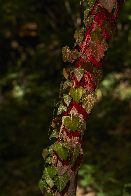 Seen in the woods