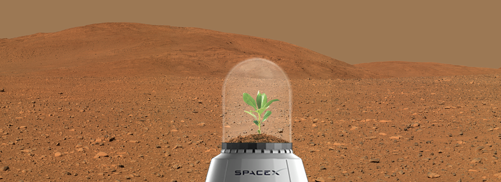 In 2001, Elon Musk conceptualized  Mars Oasis , a project to land a miniature experimental greenhouse and grow plants on Mars