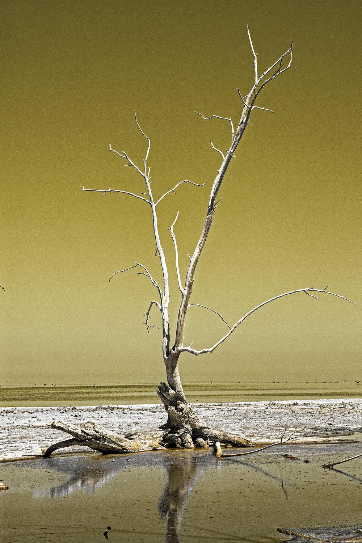 cameron hurdus phot.jpg
