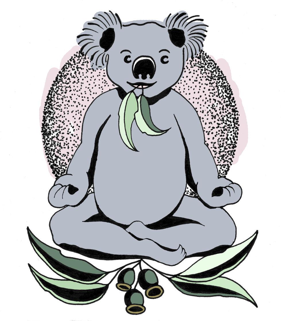 koala colour2.jpg