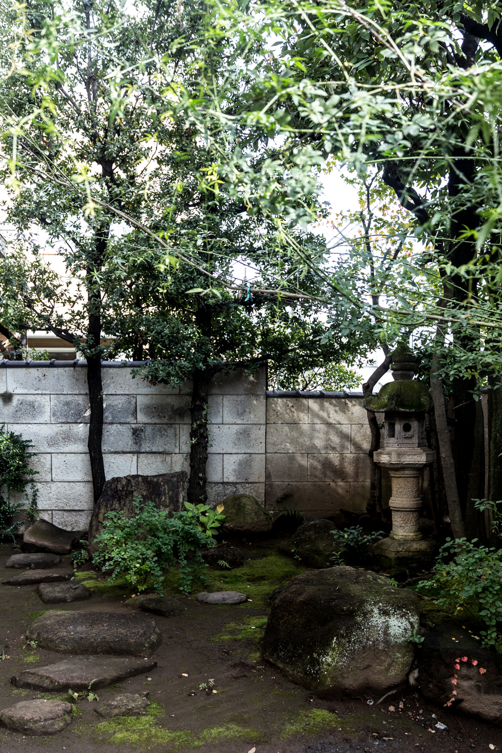The courtyard garden at our Omotesando apartment