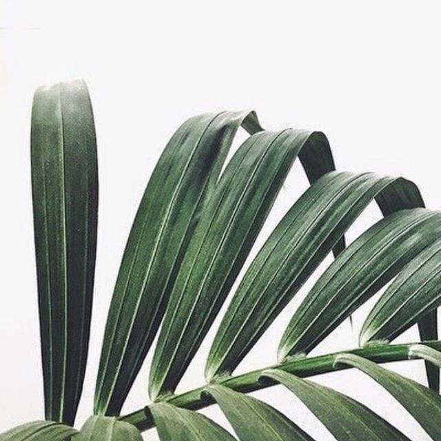 Thank you to the plants that stay green in winter 🙌🏻 #love #luxe #candles #interiors #greenery