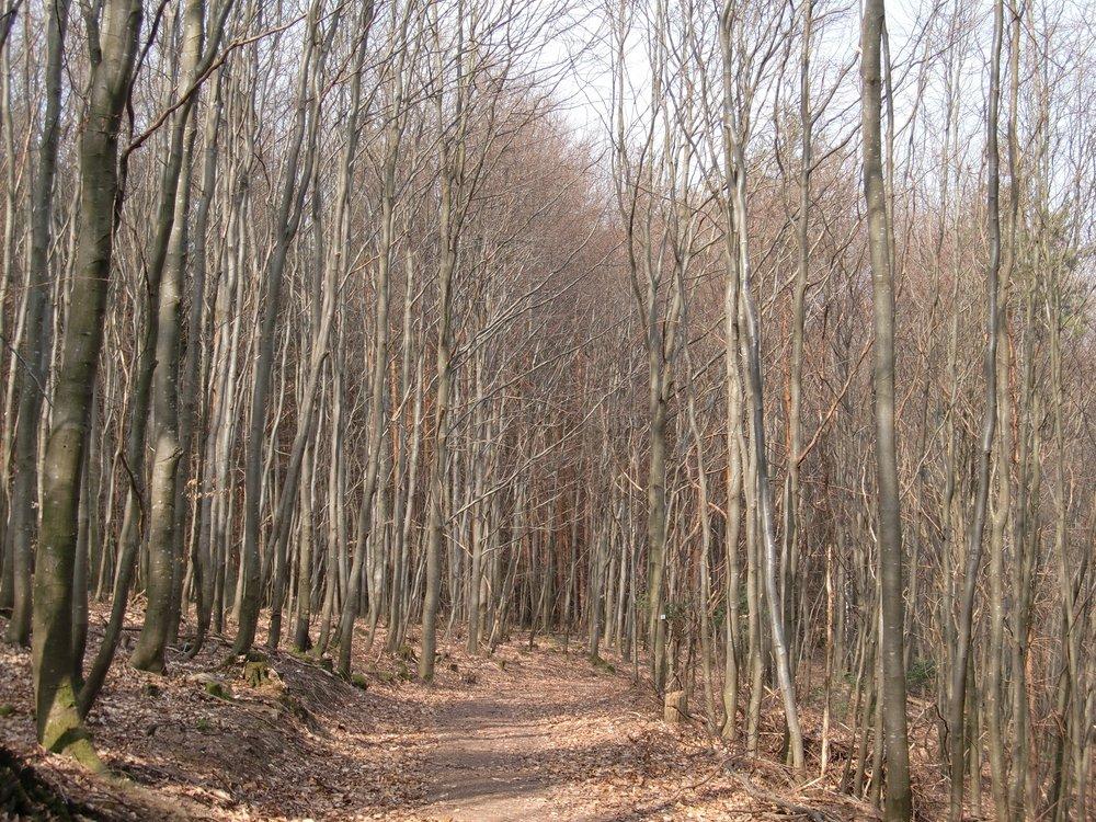 Titel:Bewegung im Wald