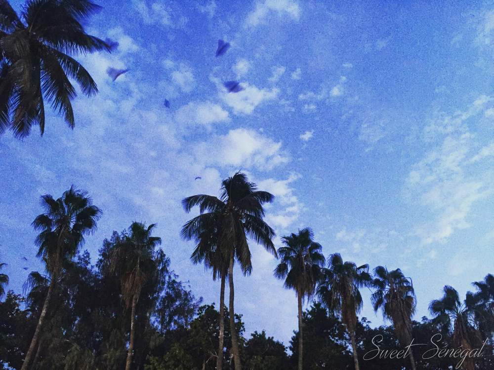 Douta Seck  Photo: Sweet Senegal