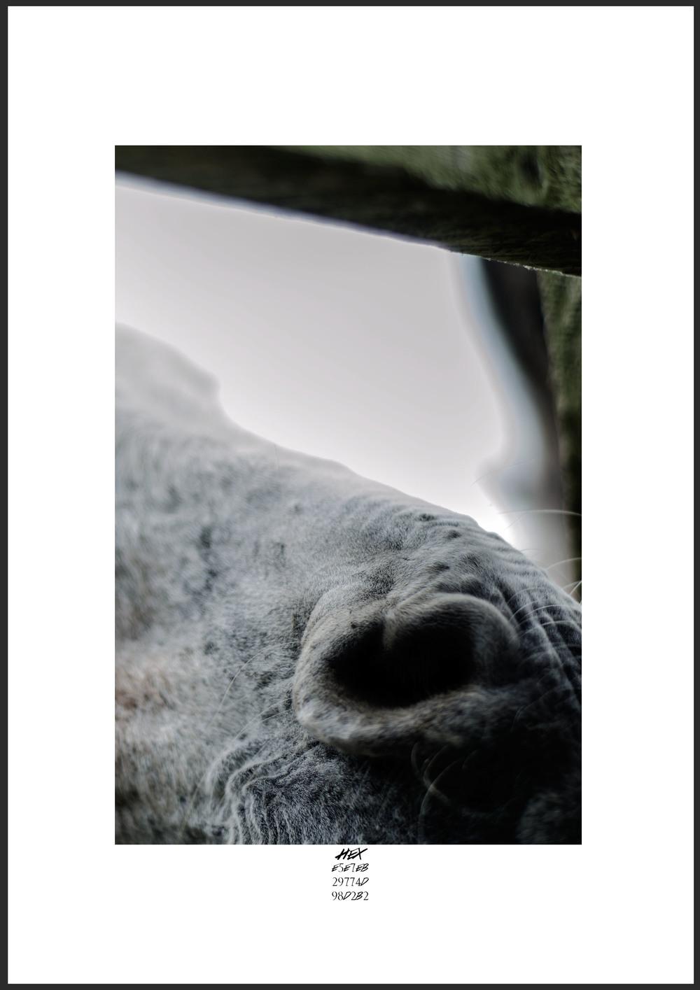 Hex Donkey.jpg