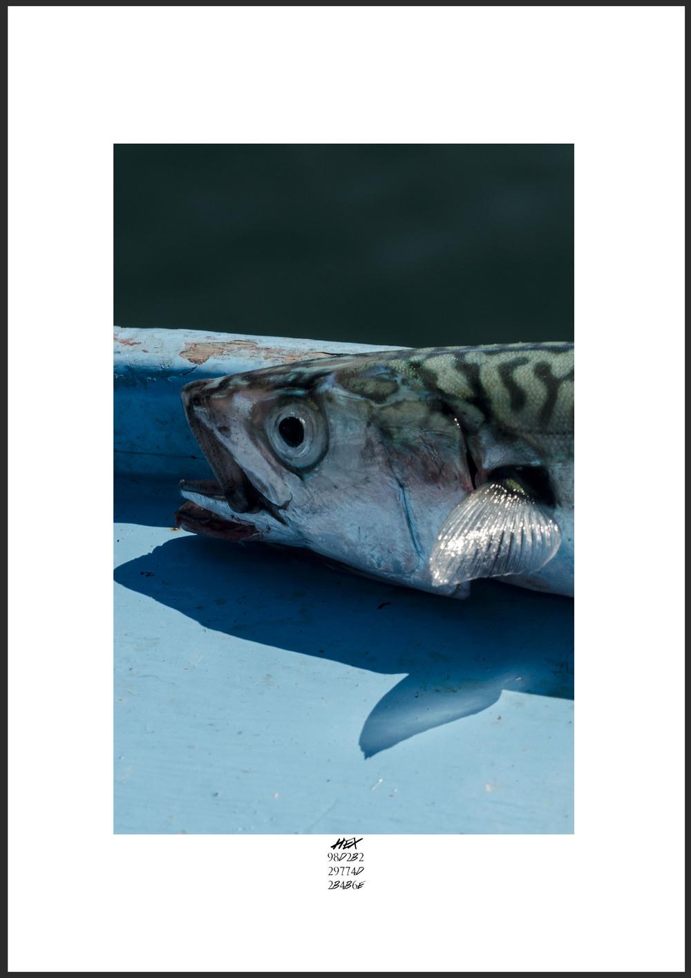 Hex Mackerel.jpg