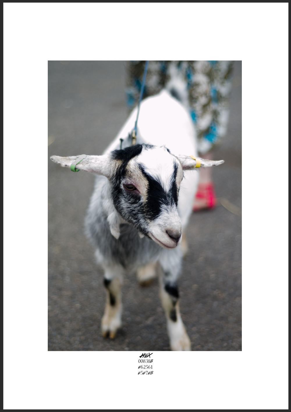 Hex Goat.jpg