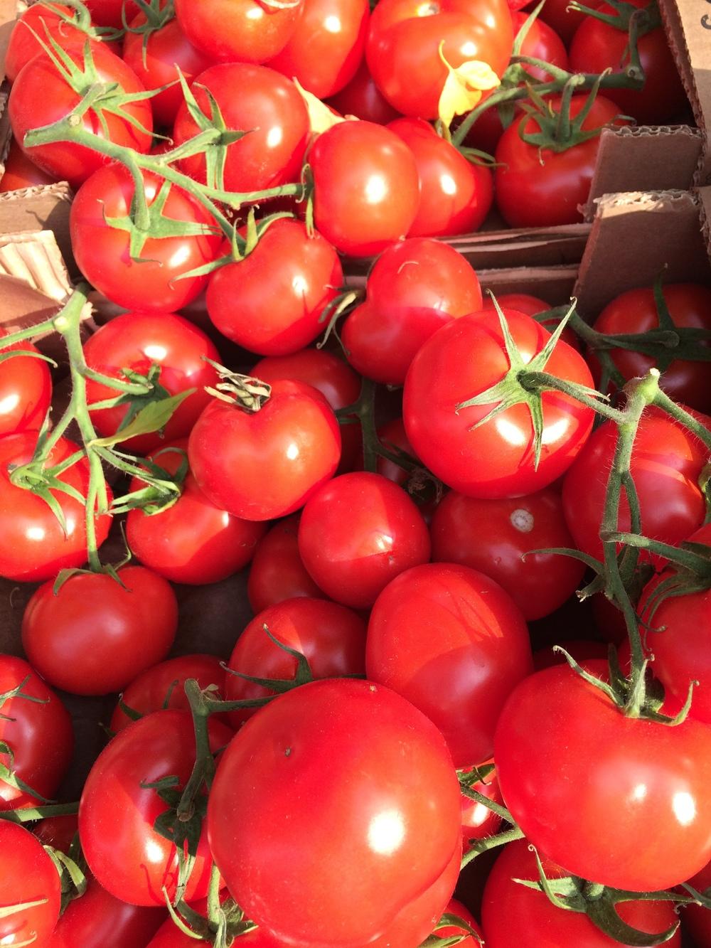 Tomatoes are amazing