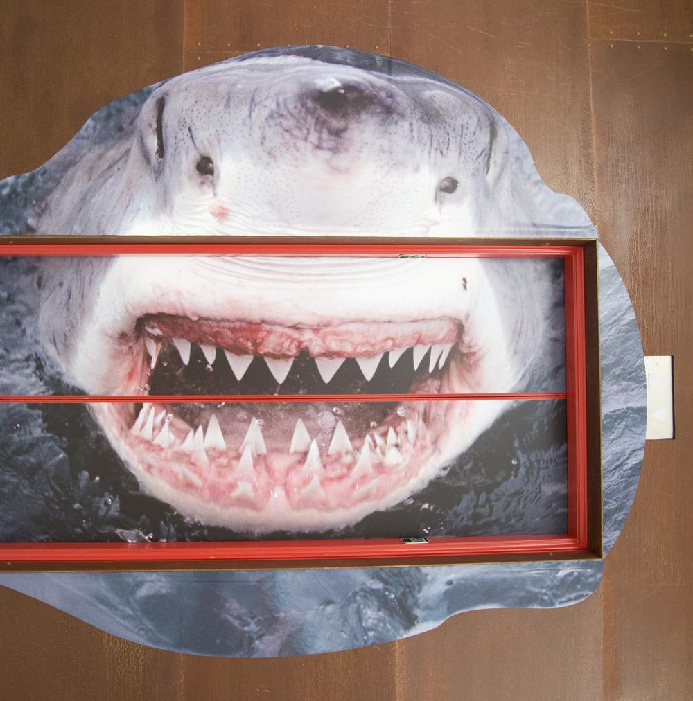 Stevie Soul Shark Week 2.jpg