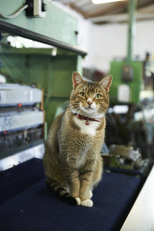 London Cloth Pet Cat