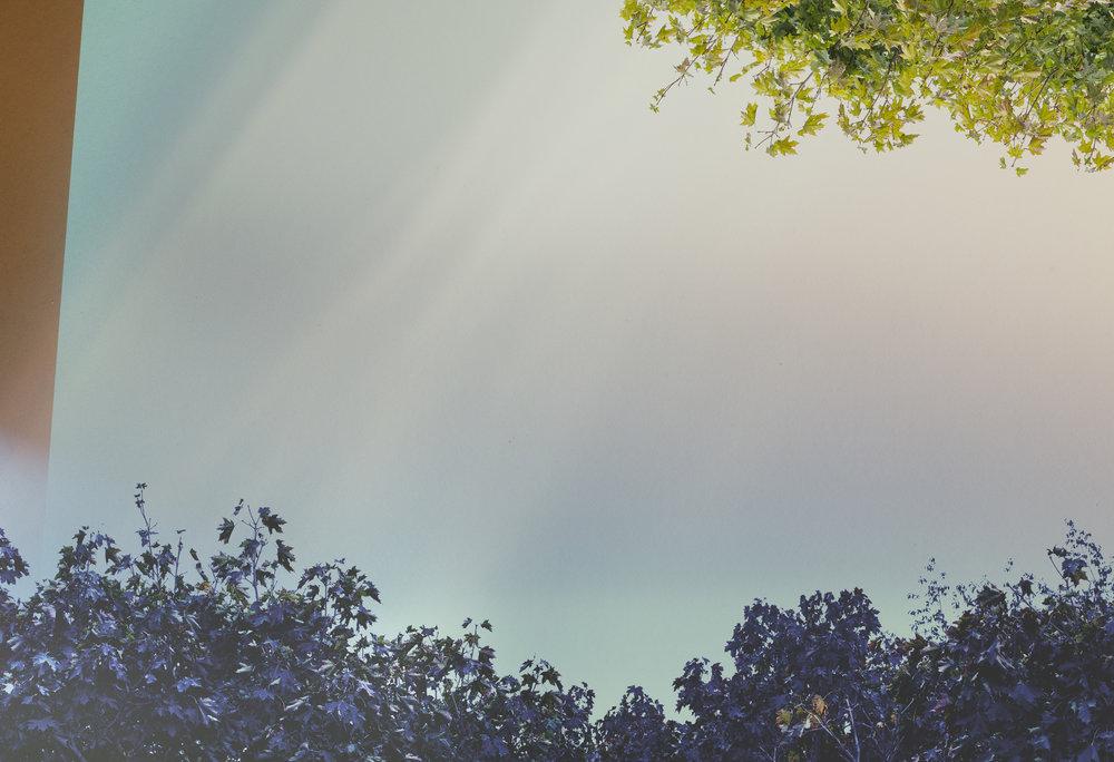 filter_trees-7674_behind the scenes_2.jpg