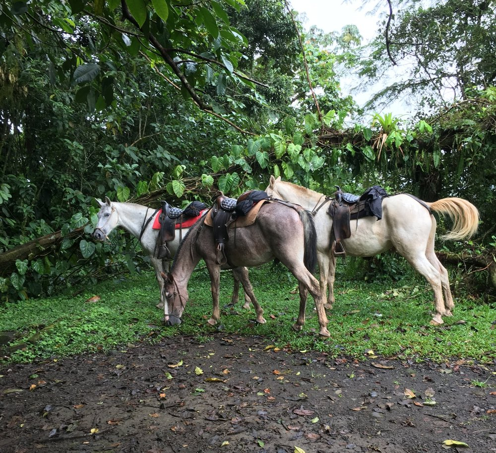 Our other guides during our Arenal Volcano experience- horses that took us on a trail ride through the rainforest.