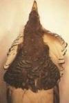 Matte, onregelmatig verspreide veren met donkergroene boordjes geven de keel een spot-effect.