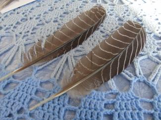 Vleugel haan