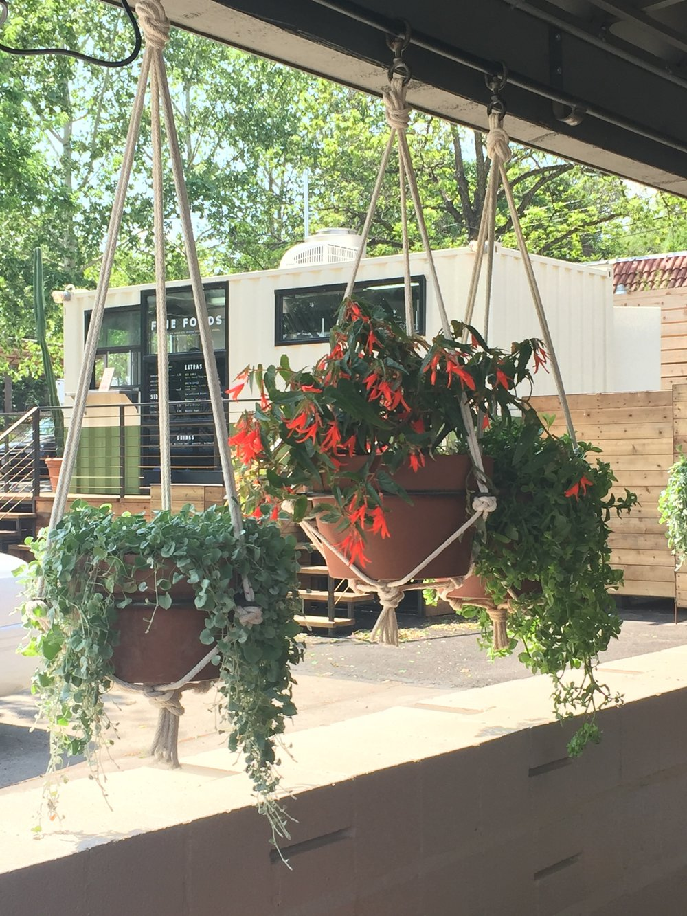 Hanging plants abound and create a more intimate and comfortable outdoor dining experience at the Austin Motel.  Design: Bunkhouse