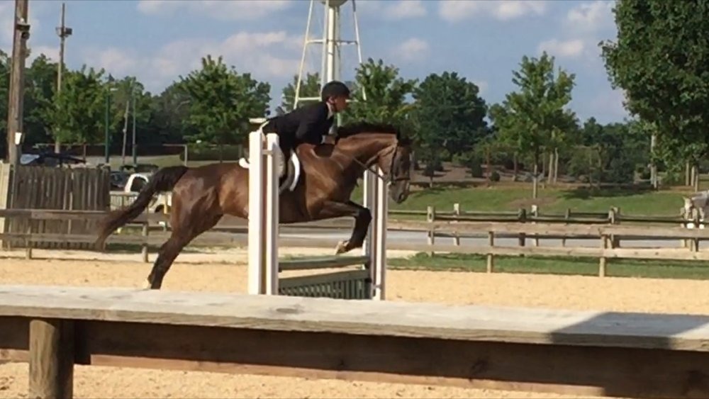Chris competing in the OTTB Greens division at the BEST show series.