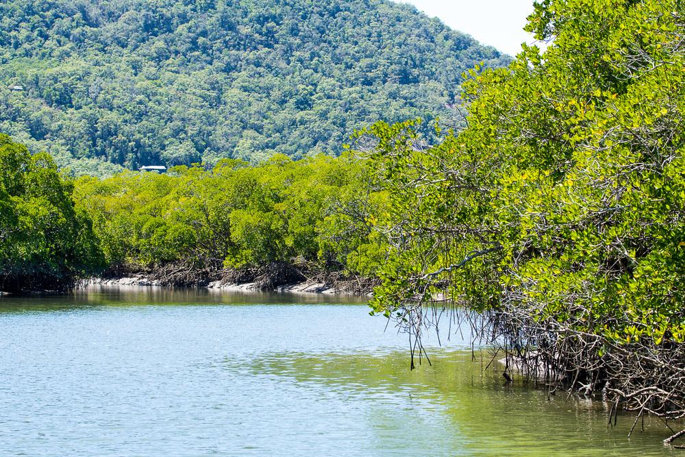 De mangroves