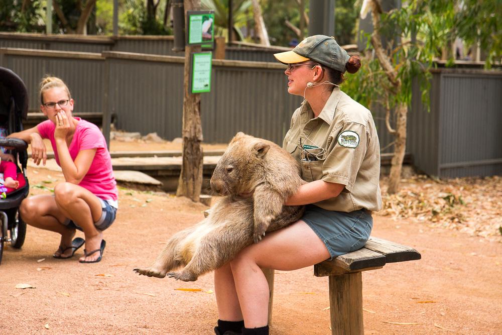 Een Wombat bij Billabong Sanctuary