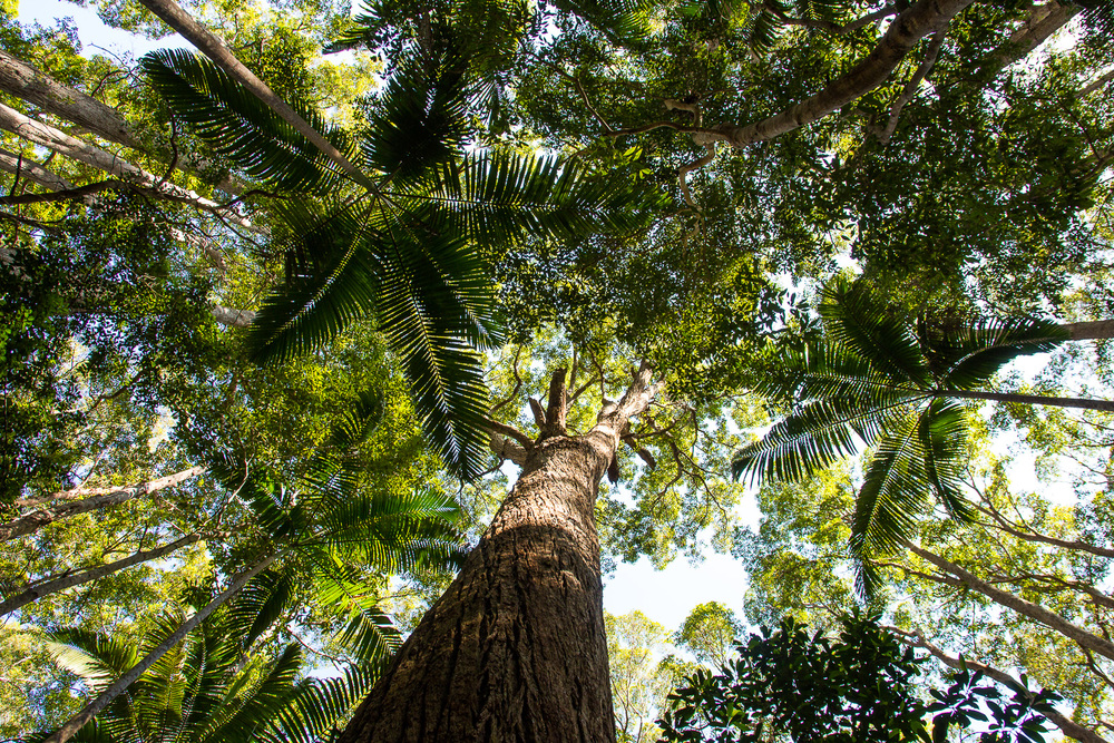 Wandeling door het regenwoud op het eiland