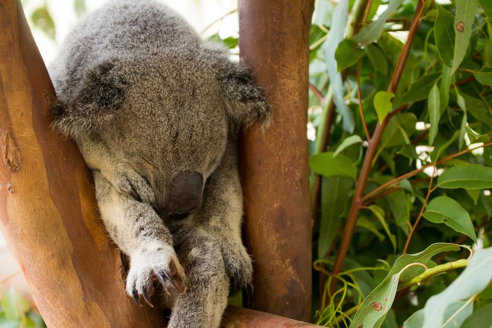 Als je dan eenmaal in een boom gaat slapen, zorg dan wel dat je goed vast zit.