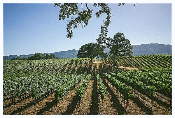 B.R. Cohn Winery in Glen Ellen, CA