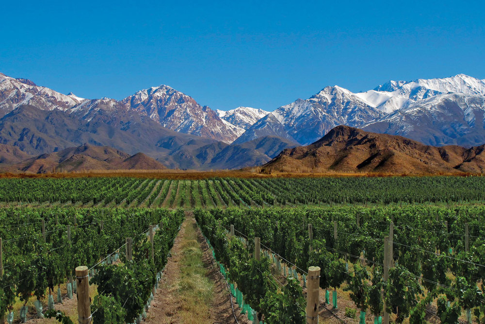 Relax with a glass of Malbec and take in the scenic backdrop of the Andes