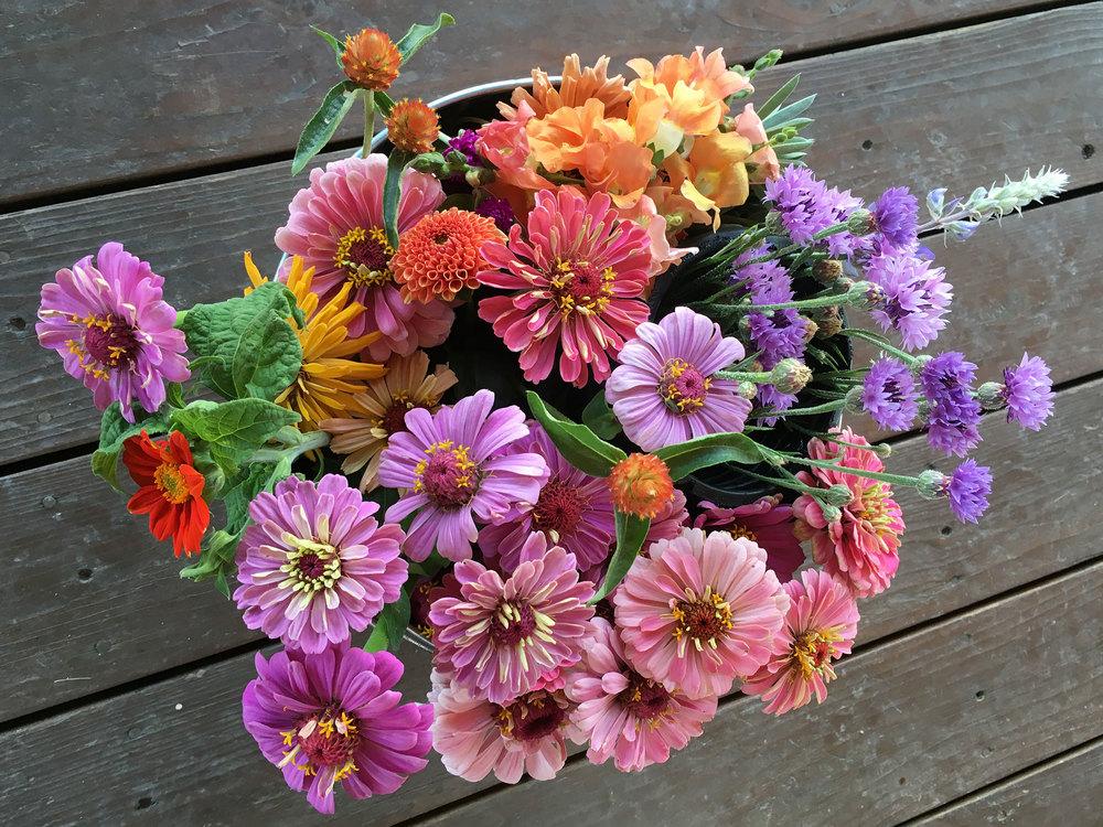flowers zinnias