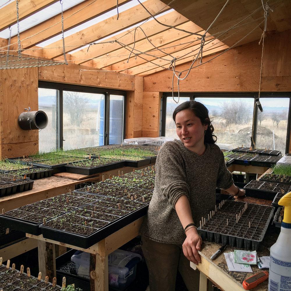 Meara in her secret seedling incubation chamber