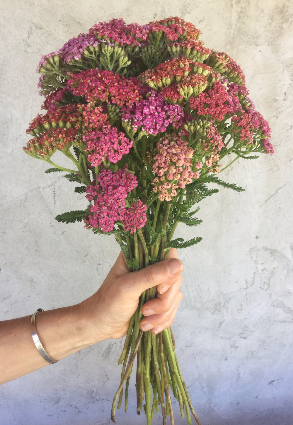 Yarrow, reds, pinks, and peaches