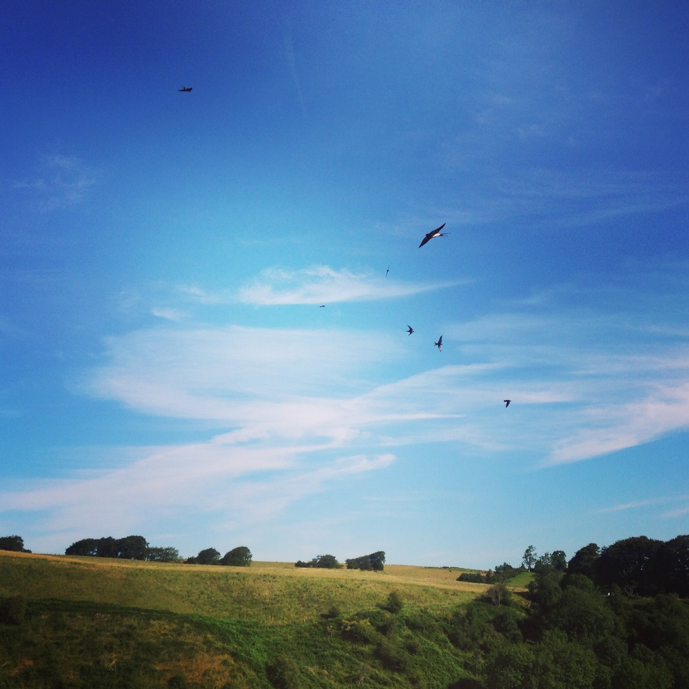 Live room view at Tpot Studios...swifts and swallows in abundance.