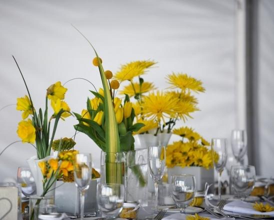Panache-Daffodils.jpg