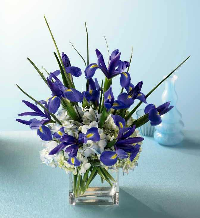 Siberian.iris.hydrangea.cube.jpg