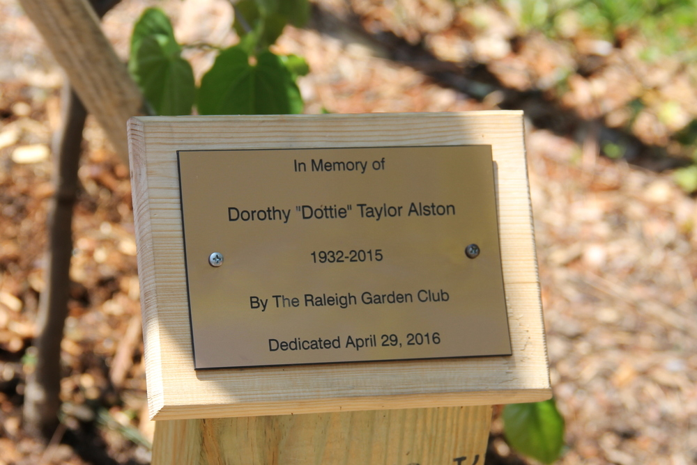 Dottie Taylor Alston.jpg