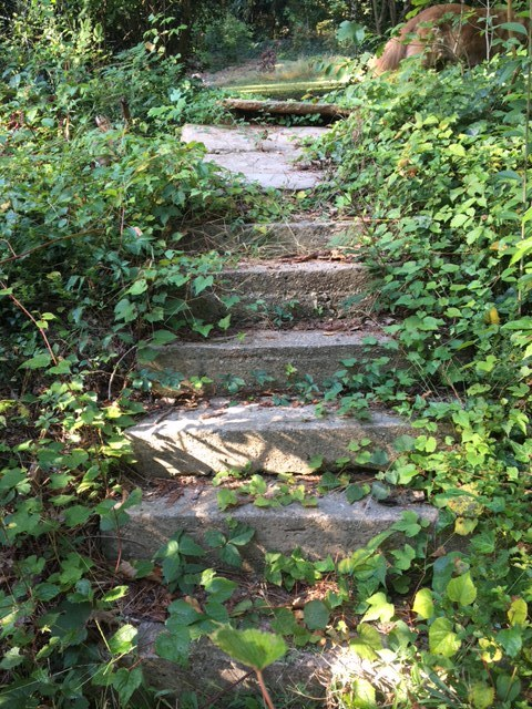 Steps leading into the park...