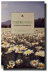 DMV Wildflowers.jpg