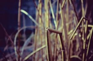 Reed-broken.jpg
