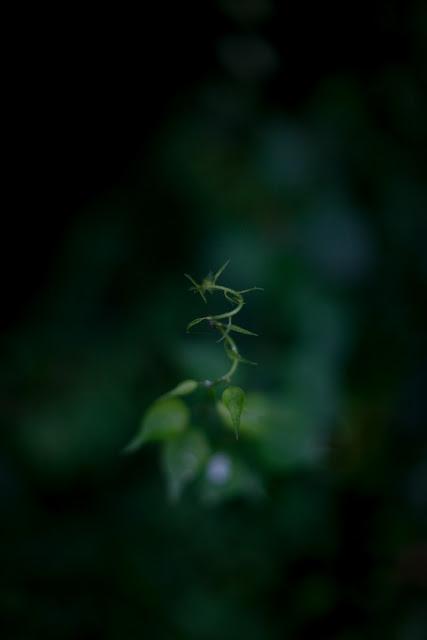 july_1_-22.jpg