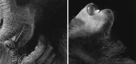 dip_3_chimp.png