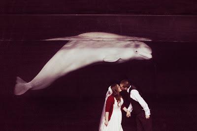 beluga-whale-wedding-ct.jpeg