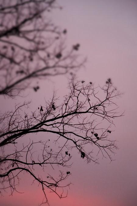 wintersunrise_blog_7.jpg