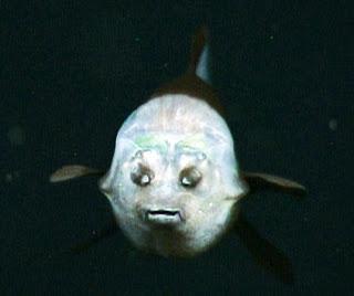 fish-transparent-head-4_21054_600x450.jpg
