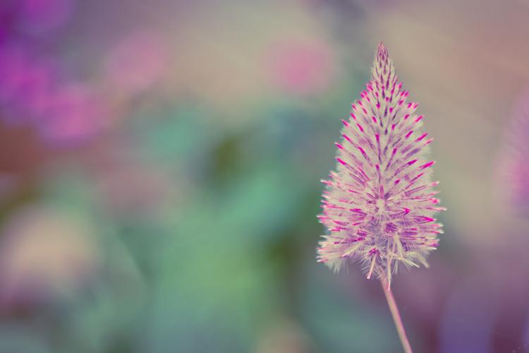 garden_1_blog.jpg