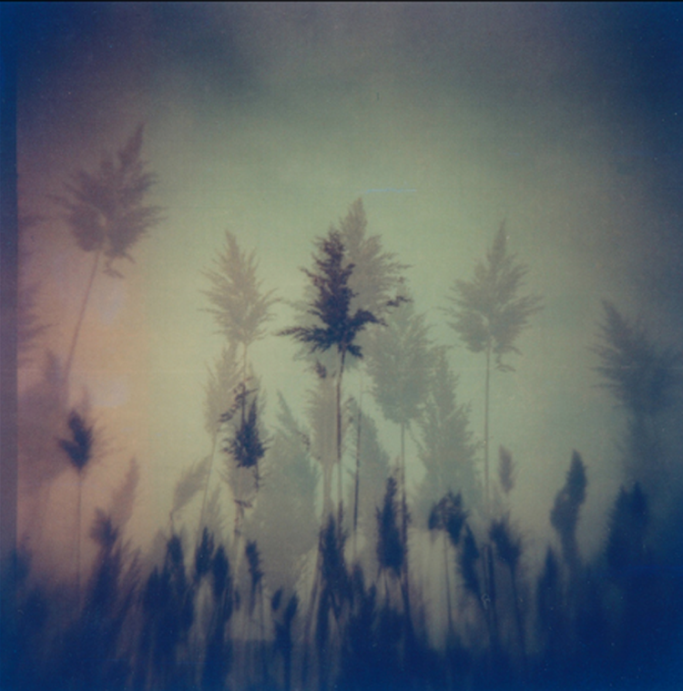 flickr_5_2.png
